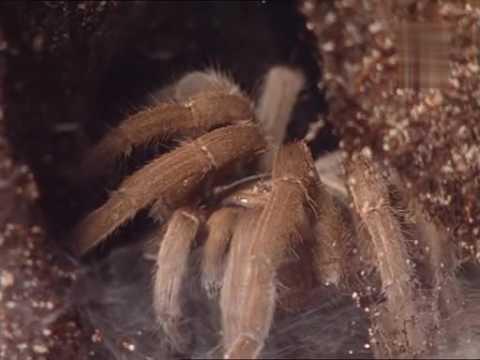 Killer Instinct   Spinnen