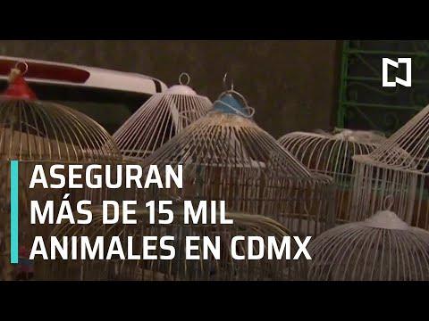 Aseguran más de 15 mil animales en alcaldía Iztapalapa - Las Noticias con Hurtado