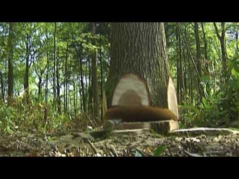 Man, Machine & the Mighty Oak