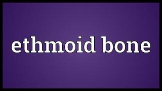 Ethmoid bone Meaning
