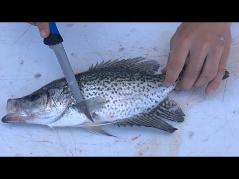How to Fillet a Crappie: So Easy A Kid Can Do It, Best Tools Needed