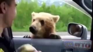 Приколы видео  Курьезы на дороге  Автоприколы