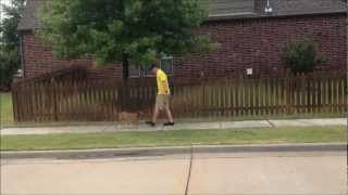 Unice - Basenji Dog Obedience Training - Tulsa