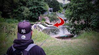PIKE FISHING using LIVE BAITS