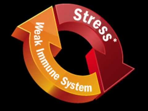 Islam and stress (Health Psychology- stress and the affect on the body)