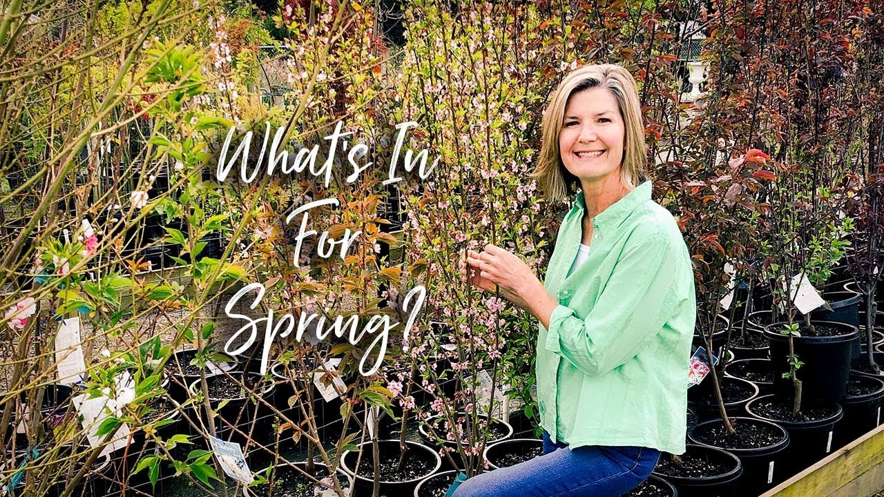 What's In For Spring?