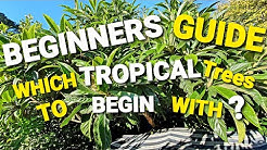 Which Tropical Trees To Begin With - As A BEGINNER