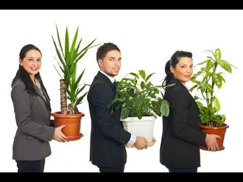 НЕПРИХОТЛИВЫЕ комнатные растения для озеленения ОФИСА