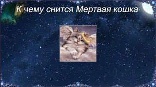 К чему снится Мертвая кошка (Сонник)