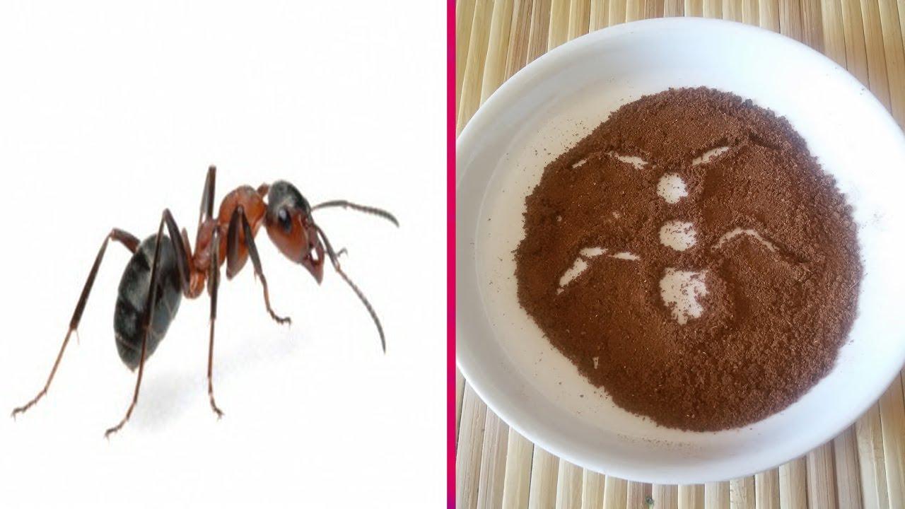 تريد التخلص من النمل اليك مبيد النمل الفعال في مكافحة النمل في المنزل مع ضمان عدم عودته مرة اخرى Youtube