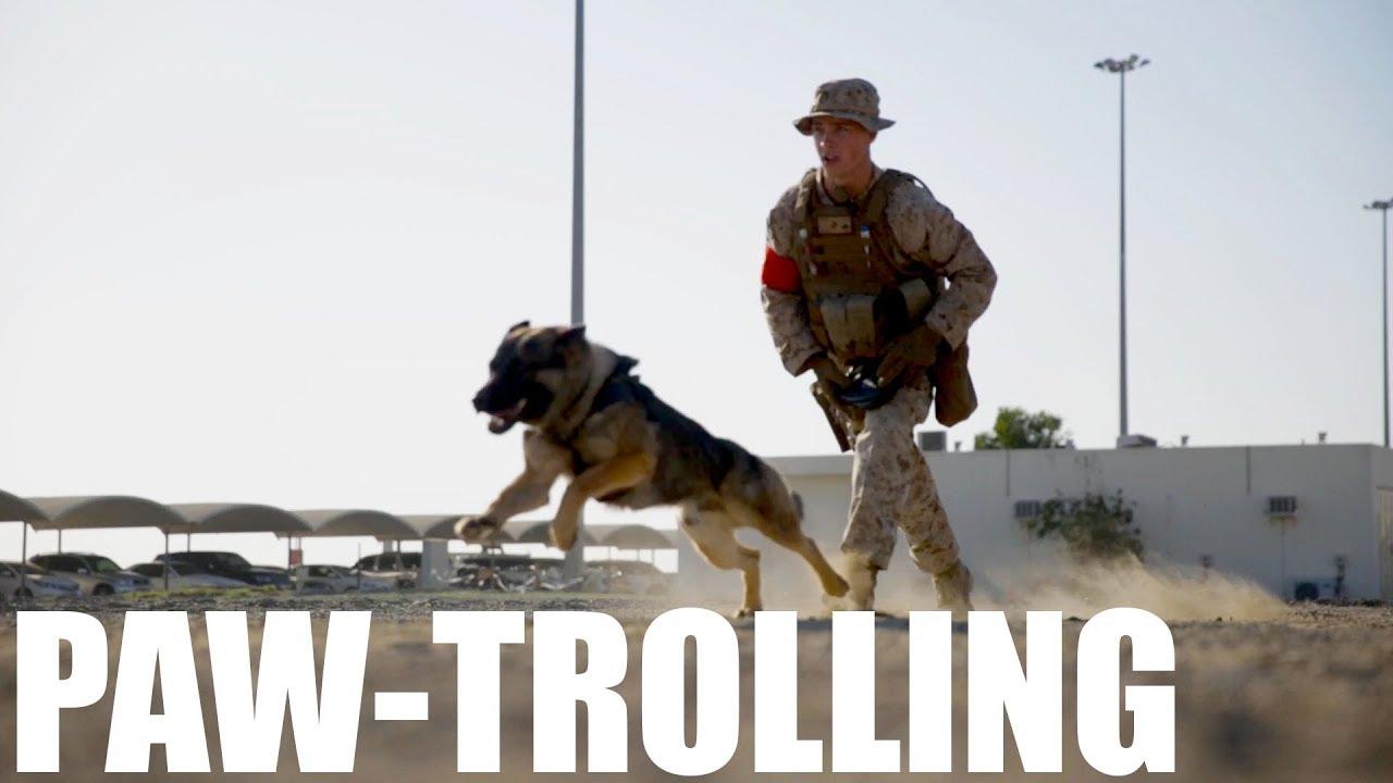 K-9 Training | Native Fury 18