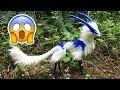 10 Удивительных Животных, о Существовании Которых вы Не Подозревали