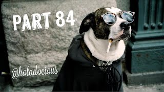 Hood Animal Voiceovers Part 84!