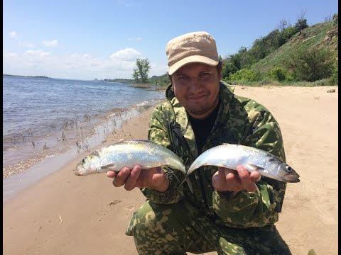 Ловля Селедки на Спиннинг №2: Селедка Пошла. Herring Fishing