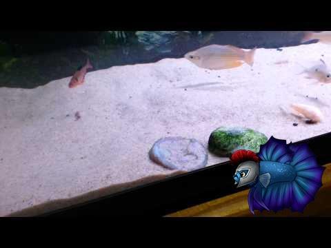 Автоматическая кормушка tetra myfeeder будет незаменима, если вы собираетесь в отпуск. Легко крепится на аквариум. Кронштейн для крепления.