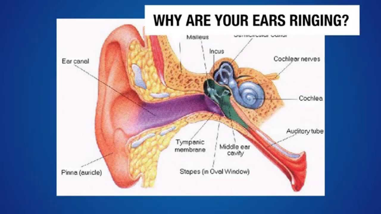 cure for tinnitus how to stop tinnitus forever watch this youtube