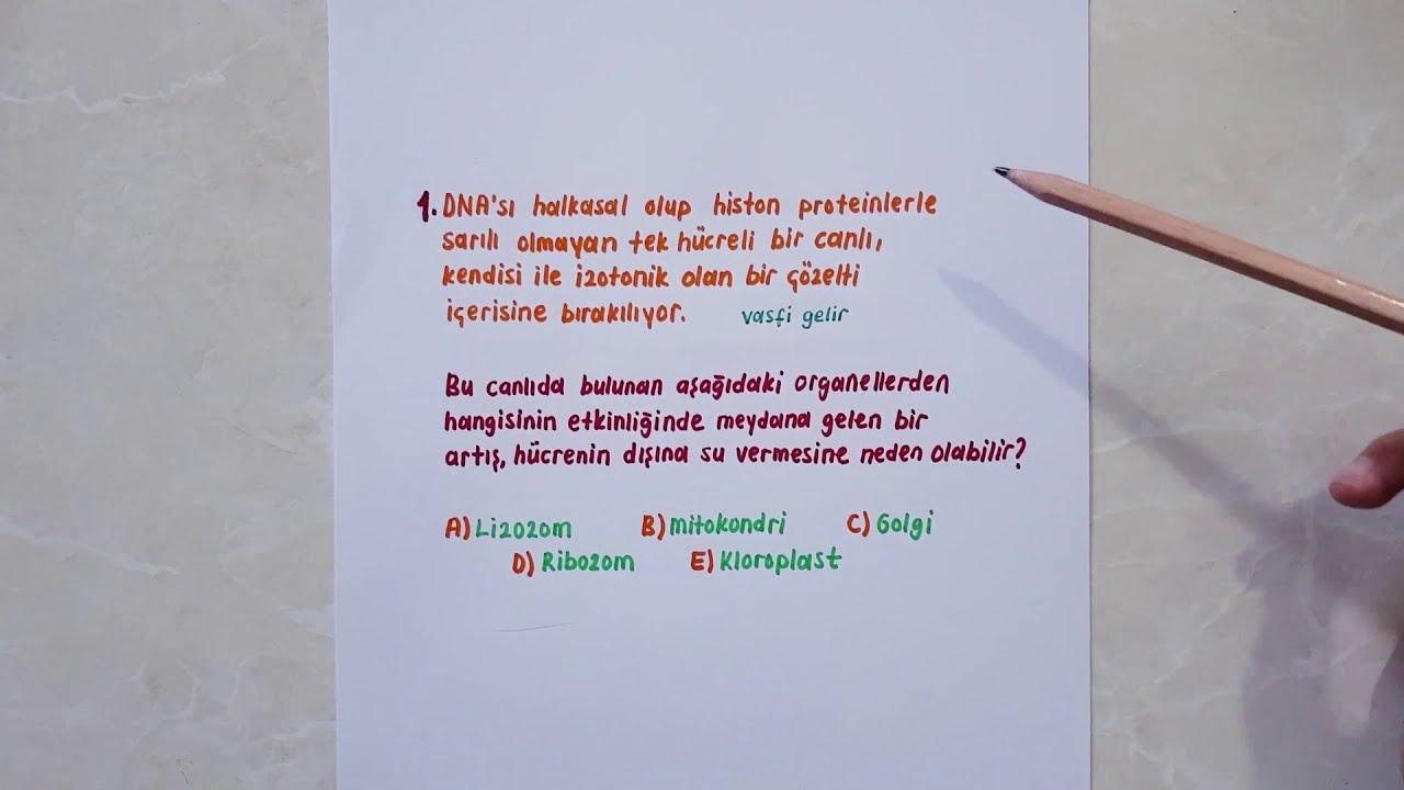 Türkiye Geneli TYT Denemesi 2 / Biyoloji Soru Çözümü