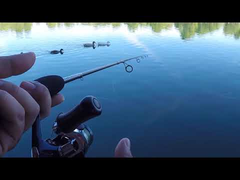 APOLLO PARK FISHING 11.24.17