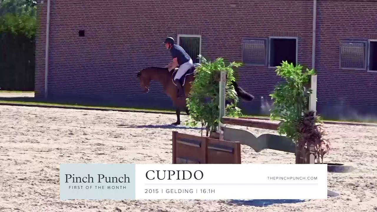 CUPIDO - Profile Video | PPFM: August 2019