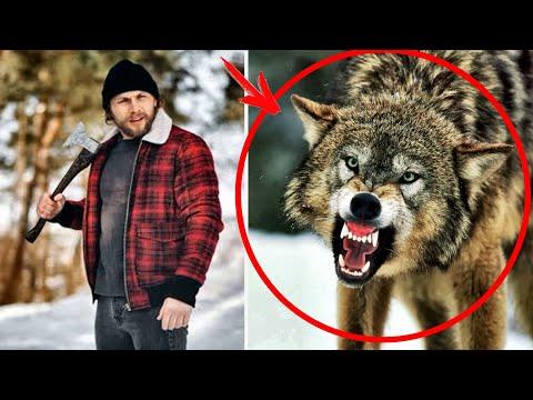 """Он спас волчицу из """"капкана"""" и ВОЛЧАТ... Спустя 5-лет в """"глухом"""" лесу они ВСТРЕТИЛИСЬ снова..."""
