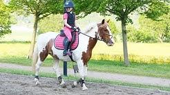 Träffa mina Nya Häst Dromore Hill Dolly !