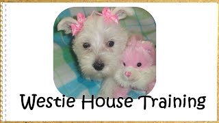 Potty Training Your Westie