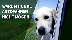 Hund Auto - Warum Hunde Autofahren nicht mögen!