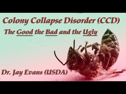 Colony Collapse Disorder (CCD) The GOOD, the BAD and the UGLY - Dr. Jay Evans