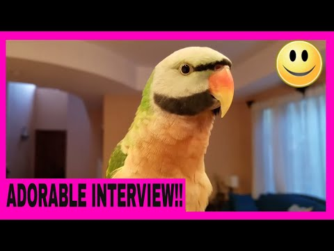 Interview With Picasso the Mustache Parakeet About Life and His