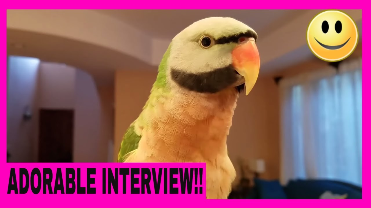 Interview With Picasso the Mustache Parakeet About Life and