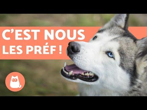 TOP 10 des races de chiens les plus populaires du MONDE