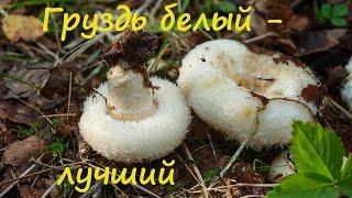 Белый груздь - лучший гриб для засола.