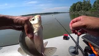 Рыбалка на реке Ловля крупного леща на донку