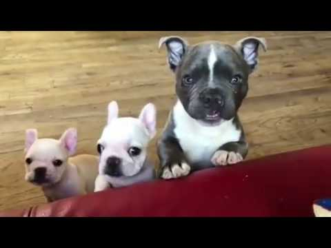 Best Funny & Cute Dog Vines Compilation | 2017