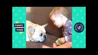 TRY NOT TO LAUGH - Funny BABIES and ANIMALS Compilation | Funny Vines August 2018