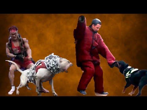 Hekal Twins -' تحدى استفزاز كلب سعران 'الكلب عضه
