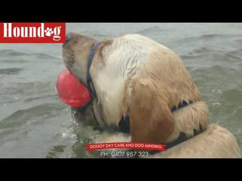 Splash And Dash Doggy Daycare With Hound Dog