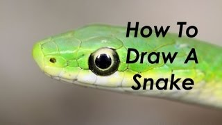 How To Draw A Snake - Drawing Dynamics - EP2 SE2