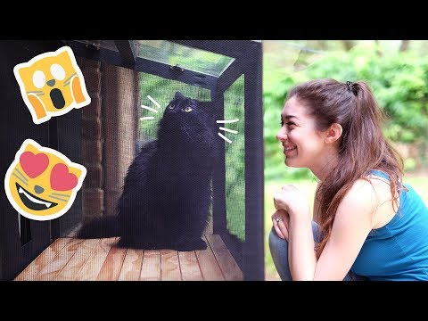 We built a patio for our cat a CATIO!