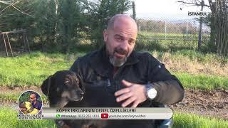 Akın TÜLÜBAŞ İle Köpek Dünyası - Doberman Hakkında Bilinmesi Gerekenler