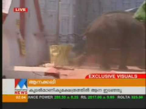 Kerala elephant attack youtube - photo#49
