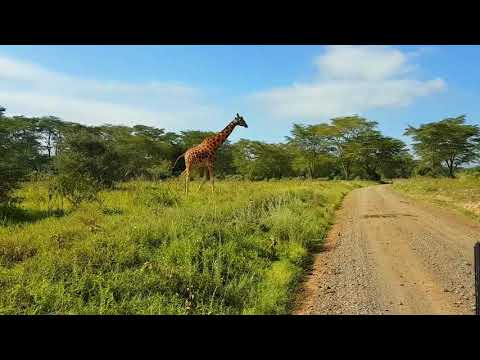 TIME I VISITED NAKURU, KENYA |TRAVEL VLOG 3|