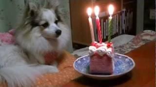 我が家の愛犬、波瑠ちゃんが12・02・23に3歳になったのでお祝いにロール...
