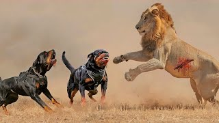 15 Most Fearless Dog Breeds in the World
