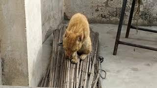 wild cat!Asian cat!cat viral videos!funny cat!cat prank