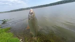 Як ми ловили рибу біля села Вороновиця