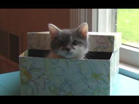 Cat Meets Kitten - Cute Meowing Kitten Little Leo!