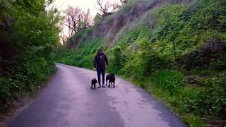 Как приучить собаку ходить рядом?Мои девки😇