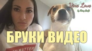 Vine Love //Бруки видео / Джек Рассел Терьер /Jack Russell Terrier