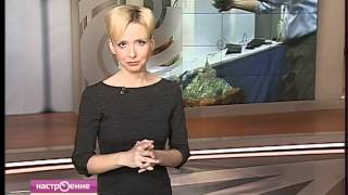 Новости науки. Дайджест 03.07.2012. Чудо-губка.(, 2012-06-26T23:21:04.000Z)
